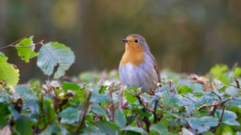 animal-avian-beak-325260
