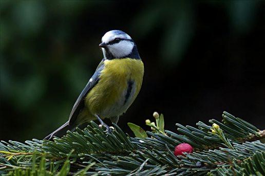 animal-avian-beak-357129