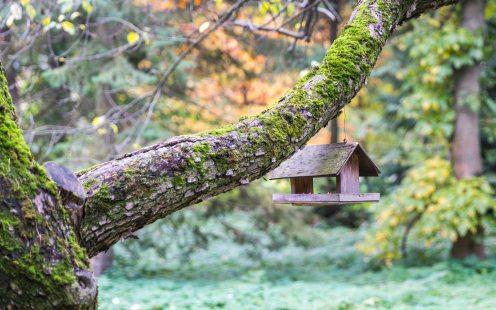 bird-house-blurred-background-branch-754738